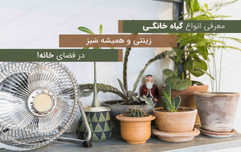 معرفی 10 نوع گیاه خانگی زینتی همیشه سبز در فضای خانه!