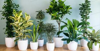 20 گیاه آپارتمانی مقاوم و همیشه سبز