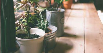 دکوراسیون منزل با گیاهان اپارتمانی (انواع مدل دکور خانه با گیاه)