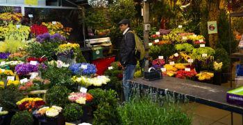نمایشگاه های گل و گیاه معروف در تهران و ایران