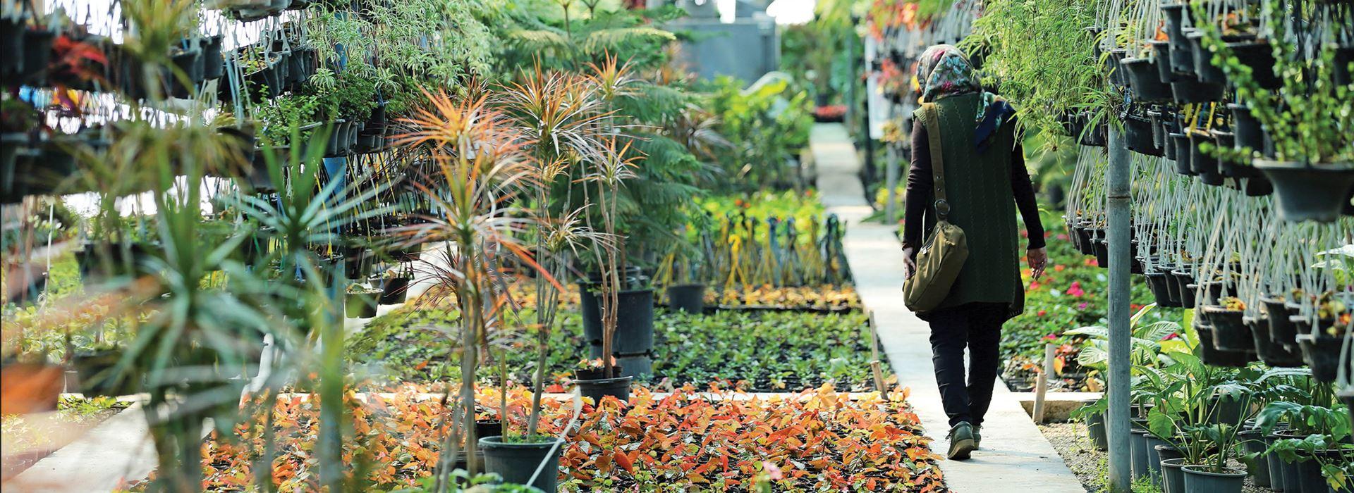نمایشگاه های گل و گیاه معروف
