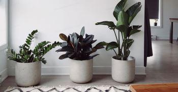 لیست بهترین گیاهان تصفیه کننده هوای خانه