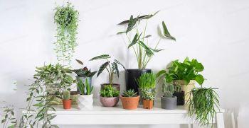 چه گیاهانی برای آپارتمان مناسب است؟   بهترین گیاهان آپارتمانی