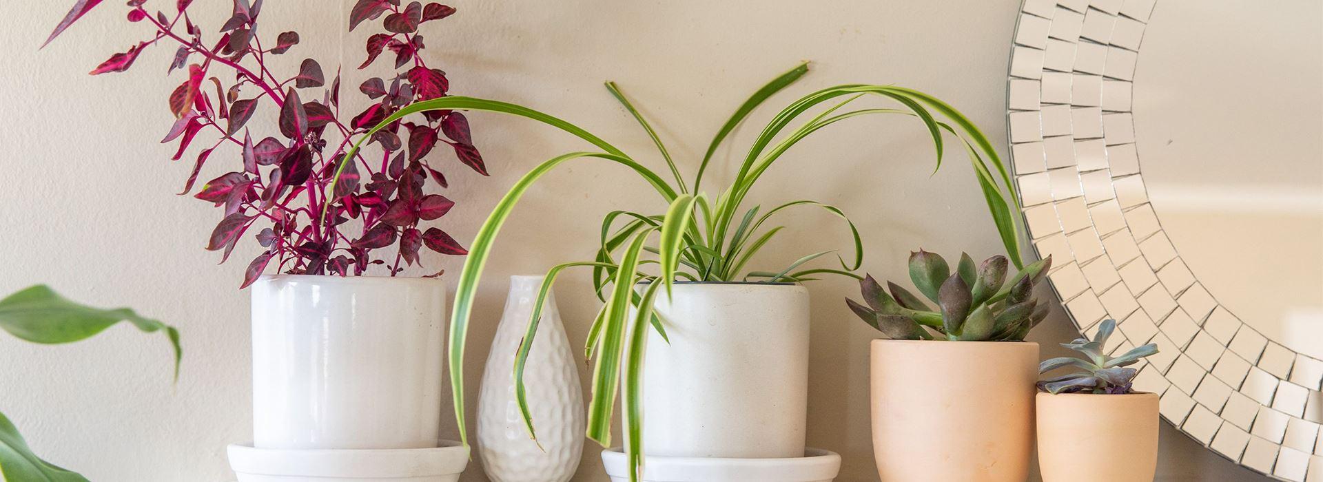 بهترین گیاهان تصفیه کننده
